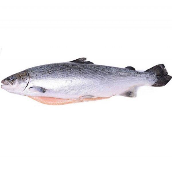 лосось атл. 1-2кг